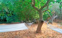 two hammocks