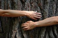 Tree Hugging Environmentalists