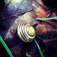 Snail on Leaves