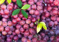 Fresh red grape fruit