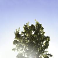 Albero con cielo