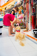 Cute Golden retriever and Tibetan Terrier in pet store