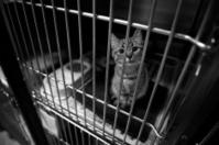 Sad Cat In A Cage