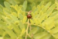 Ladybug Journey