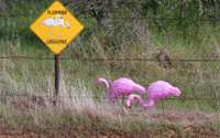 Plastic Flamingo Crossing