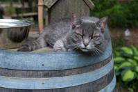 Cat on a barrel