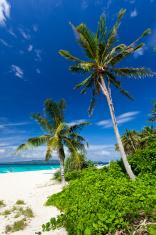 Tropical scene, Philippines