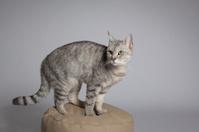 Cat on stool