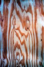 나무 질감 티크 스톡 사진 - FreeImages.com