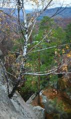 Birch on lofty stones in forest