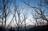 Winter trees