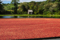 Corralled Cranberries