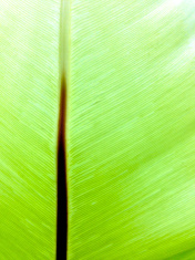 Singapore, tropical foliage.
