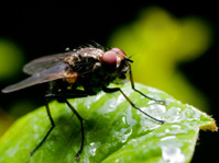 The Macro Fly