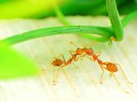 Ant Kiss.