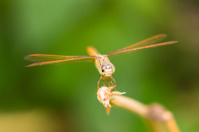 Dragonfly on the nature, macro