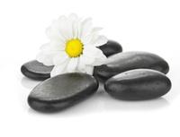 zen basalt stones and daisy isolated on white