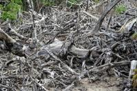 dead tree debris