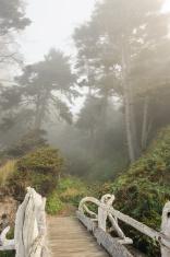 Bridge Toward Fog Forest