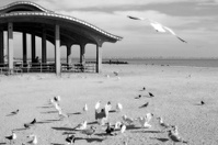 Hungry seagulls on the beach