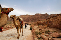 Petra avenue with Camels