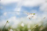 White flowers, close up photo