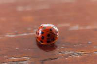 Ladybug on wood