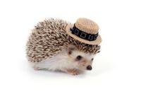 Little hedgehog.
