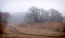 Gray day landscape