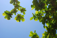 green leaf & blue sky