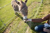 Donkey feed