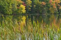 Reeds by Hidden Lake