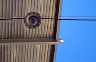 light bulb against tin roof
