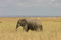 Amboseli Hitchikers