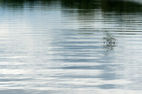 Water surface