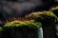 moss on posts