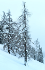 Winter mountain misty landscape
