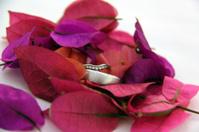 Wedding rings on petals