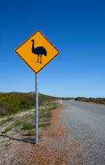 Beware Emus!