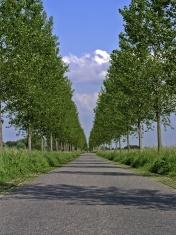 Typical dutch avenue