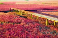 Iron bridge on Wetland