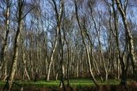 trees in winter sun