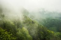 Misty forest in Saxon Switzerland