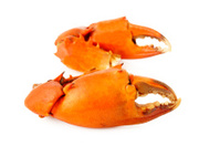 Boiled crab claw on white background