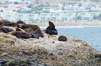 Seals sun tanning on seal island