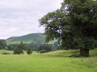 English countryside (Yorkshire)
