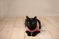 Cat Sitting on Wood Floor