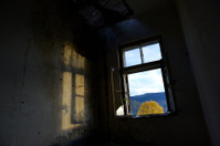 War-damaged building and autumn tree in Sarajevo