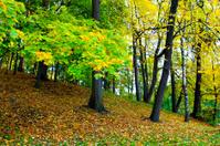 vivid park