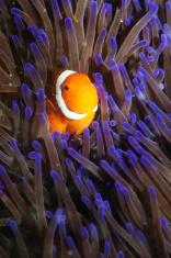 Good Morning Nemo